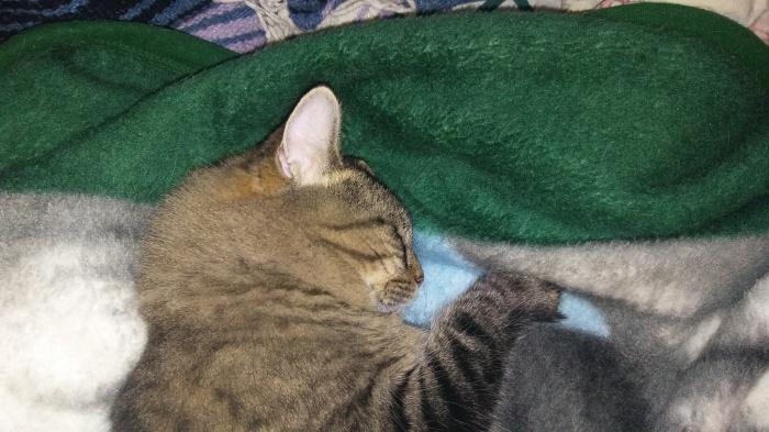 11.19.16 002 MAMA sleeping.jpg